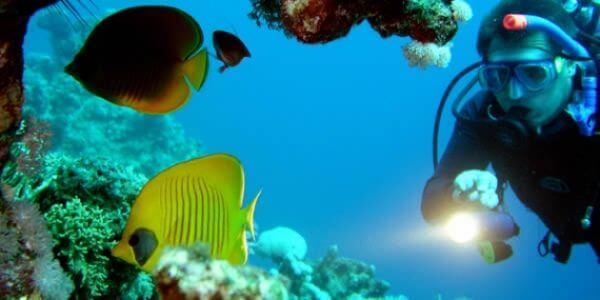 diver at Elephant Head