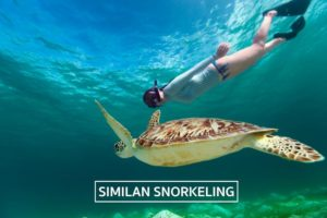 snorkeling at Similans with turtle, link