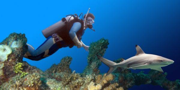 diver and black tip shark at West of Eden