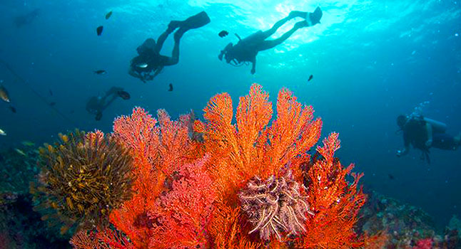 divers at Richelieu Rock