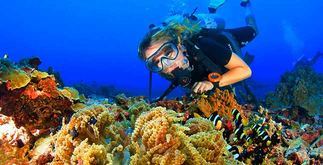 coral reef with female diver and clownfish